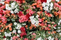 The flower beds in formal of garden. A flower beds in formal of garden Stock Photography