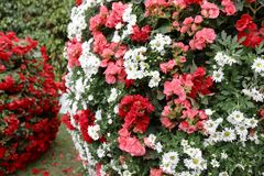 The flower beds in formal of garden. A flower beds in formal of garden Stock Image