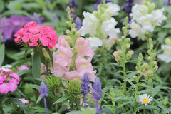 Flower beds in formal garden Stock Image