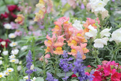 Flower beds in formal garden Royalty Free Stock Images