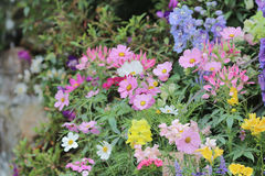 Flower beds in formal garden Stock Photography