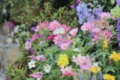 Flower beds in formal garden. The  flower beds in formal garden Stock Photography