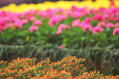 Flower beds in formal garden. The flower beds in formal garden Stock Images