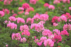 Flower beds in formal garden Royalty Free Stock Photography