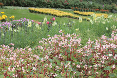 Flower beds in formal garden Stock Photo