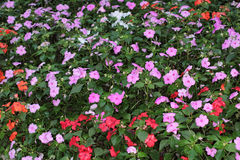 Flower beds in formal garden Royalty Free Stock Image