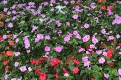 Flower beds in formal garden. The flower beds in formal garden Royalty Free Stock Image