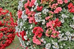 The flower beds in formal of garden. A flower beds in formal of garden Stock Images