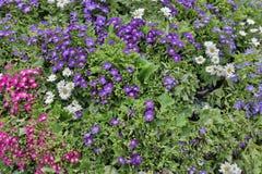 The flower beds in formal of garden. A flower beds in formal of garden Royalty Free Stock Photography