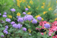 A flower beds in formal garden at outdoor. The flower beds in formal garden at outdoor Stock Photos