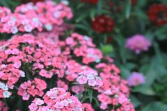 A flower beds in formal garden at outdoor. The flower beds in formal garden at outdoor Stock Images