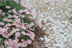 A flower beds in formal garden at outdoor. The flower beds in formal garden at outdoor Stock Photography