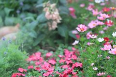 A flower beds in formal garden at outdoor. The flower beds in formal garden at outdoor Stock Photo