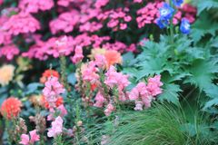 A flower beds in formal garden at outdoor. The flower beds in formal garden at outdoor Royalty Free Stock Images