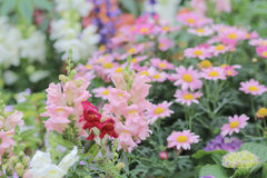 Flower beds in formal garden. The flower beds in formal garden at spring Stock Photo