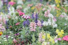 Flower beds in formal garden. The flower beds in formal garden at spring Stock Images