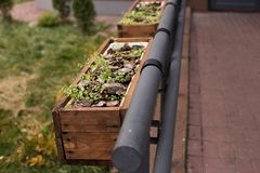 Flower beds with grass on the railing. At the street Stock Images
