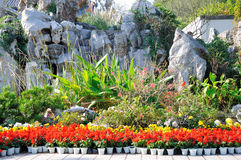The flower beds Stock Photos