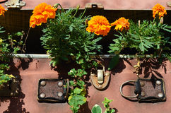Flower beds in an old suitcase (travel, travel, travel agency, d Royalty Free Stock Image