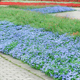 Flower beds and paths. Beautiful flower beds and walking paths Royalty Free Stock Photography