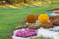 Flower beds in a shape of an apples with colorful chrysanthemums. Parkland in Kiev, Ukraine. Royalty Free Stock Photography