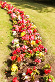 Flower beds Royalty Free Stock Photos