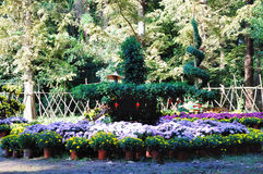 The flower beds Royalty Free Stock Photo