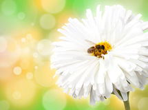 Flower with bee Royalty Free Stock Photo