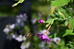 Flower and bee stock photos