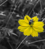 Flower and bee. Yellow flower and bee art color Stock Images