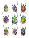 Flower beetles in white background. A plate of flower beetles collection Stock Photo