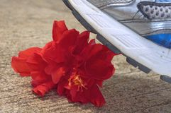 Flower being step on Stock Images