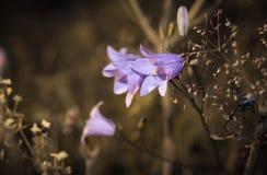 Flower bells Stock Image