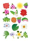 Flower and berry set Royalty Free Stock Image