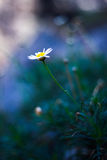 Flower. A beutiful small flower blooming Stock Photo