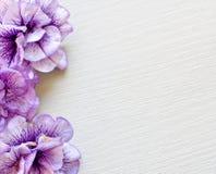 Flower BG Royalty Free Stock Photography