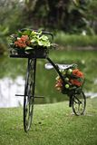 Flower bicycle Royalty Free Stock Photos
