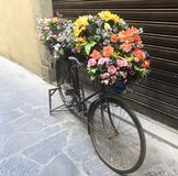 Flower bicycle in Florence Italy royalty free stock photos