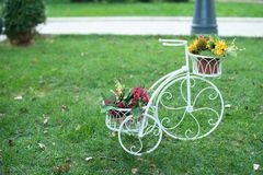 Flower bicycle on the garden royalty free stock photography
