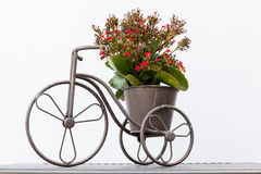 Flower on a bike. On a table stay a flower bike Stock Photos