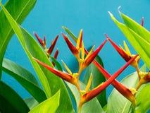 Flower - bird of paradise Royalty Free Stock Image