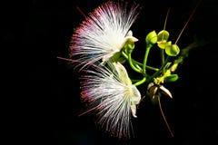 Flower on black-2 Stock Image