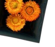 Flower on black ceramic bowl. Royalty Free Stock Photos