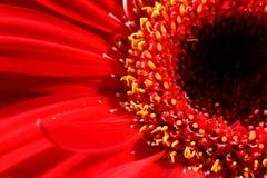 The flower black hole Royalty Free Stock Photos