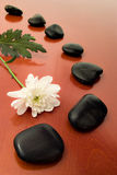 Flower and black stones Royalty Free Stock Image