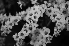 Flower. Black and white flower shot Royalty Free Stock Images