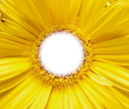 Flower with blank center. Stock Photo
