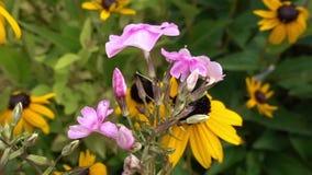 Flower in bloom in the garden. In spring stock footage