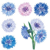 Flower bloom  icon set. Cornflower isolated. Royalty Free Stock Photos