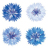Flower bloom  icon set. Cornflower isolated. Stock Photo